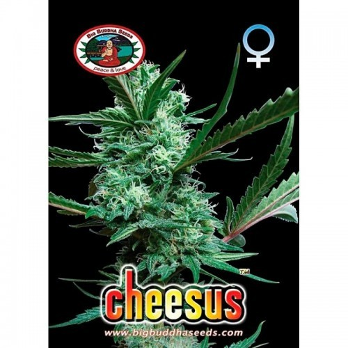 Cheesus